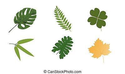ábra, elszigetelt, fehér, különféle, levél növényen, háttér., alakzat