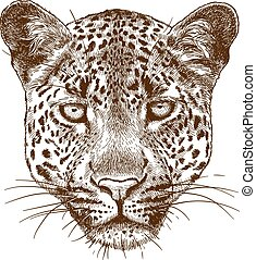 ábra, metszés, arc, leopárd