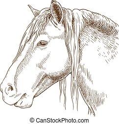ábra, metszés, fej, ló