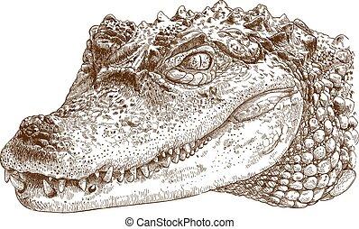 ábra, metszés, krokodil, fej