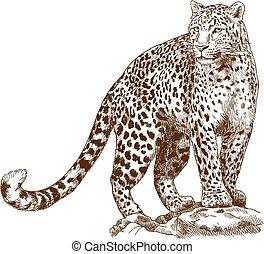 ábra, metszés, leopárd, rajz