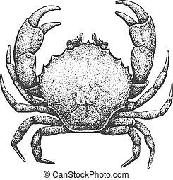 ábra, metszés, tengeri rák