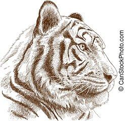 ábra, metszés, tigris fő