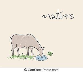 ábra, természet, ivás, őz