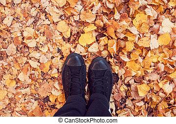 álló, ősz kilépő, föld, befedett