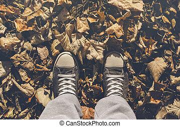 álló, száraz, ősz kilépő