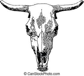 állatállomány, skull.