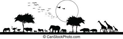 állat, árnykép, szafari, szépség