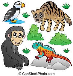 állat 2, állhatatos, állatkert
