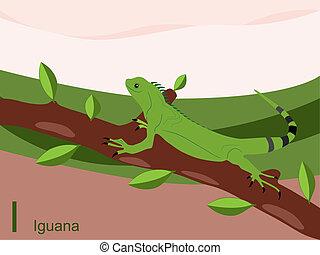 állat, abc, iguana
