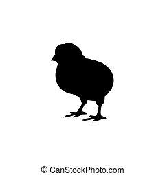 állat, csibe, madár, árnykép, fekete