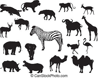 állat, gyűjtés, afrikai