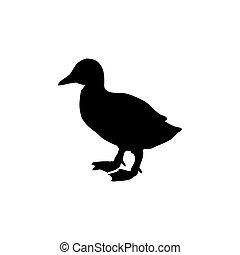 állat, madár, árnykép, kiskacsa, fekete
