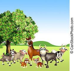 állat, tanya