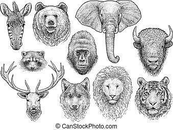 állat, vektor, gyűjtés, metszés, rajz, megtölt rajzóra, ábra, tinta, fej