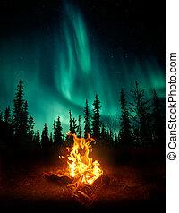 állati tüdő, északi, vadon, tábortűz