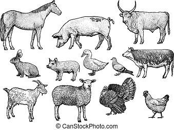 állatok, ábra, tanya, rajz, gyakorlatias, metszés, vektor, megtölt rajzóra