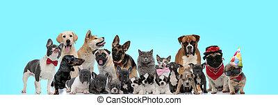 állatok, együtt, csoport, álló, boldog, nagy