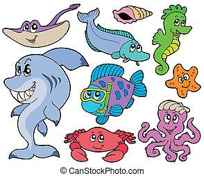 állatok, gyűjtés, óceán