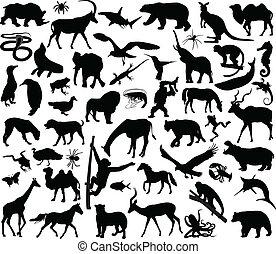 állatok, gyűjtés