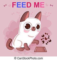 állatok, shelter., cica, feed., őt kérdez, segítség, őt, sziámi