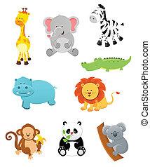 állatok, szafari
