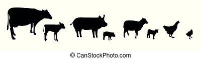 állatok, tanya, elszigetelt, körvonal, vektor, háttér, fehér