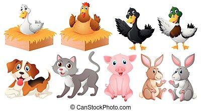 állatok, tanya, kinds, különböző