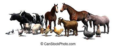állatok, tanya