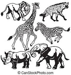 állhatatos, állatok, afrikai