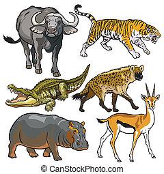 állhatatos, állatok, afrikai, vad