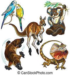 állhatatos, állatok, ausztrál