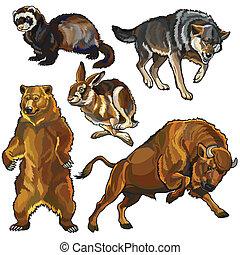 állhatatos, állatok, európai, vad