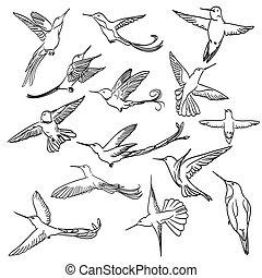 állhatatos, colibri, ár, egyenes, elkészített, rajz