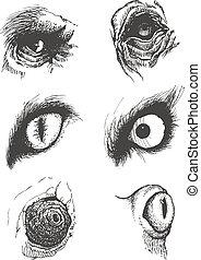 állhatatos, eps8, kéz, vektor, állat, eyes., drawn.