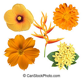 állhatatos, gyönyörű, sárga virág
