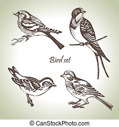 állhatatos, hand-drawn, madár, ábra