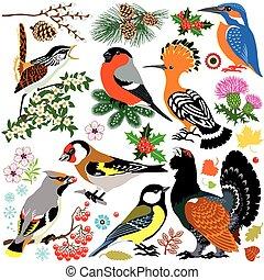 állhatatos, madarak