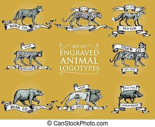 állhatatos, oroszlán, tiger, amerikai hiúz, húzott, szüret, róka, jelvény, piros, király, nagy, leopárd, hord, kéz, jel, állatok, vaddisznó, hiúz, vad, farkas, emblémák, bevésett, vagy