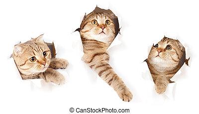 állhatatos, szakadt, elszigetelt, macska, dolgozat, kilyukaszt, egy, lejtő