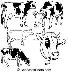 állhatatos, tehén