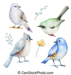 állhatatos, vízfestmény, birds.