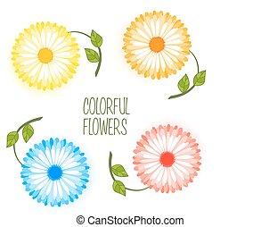 állhatatos, virág, színes