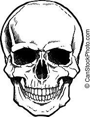 állkapocs, fehér, fekete, emberi koponya