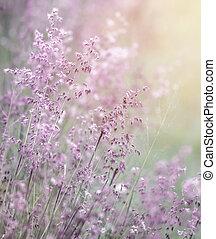álmodozó, mező, rózsaszínű virág