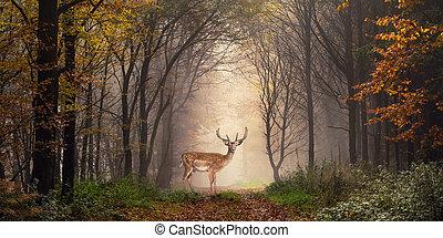 álmodozó, színhely, fallow rőtvad, erdő