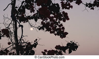 árnykép, ég, fa, ellen, hold, éjszaka