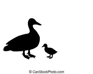 árnykép, kiskacsa, fekete, kacsa, animal., madár