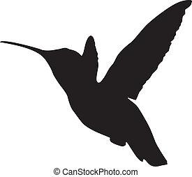 árnykép, kolibri