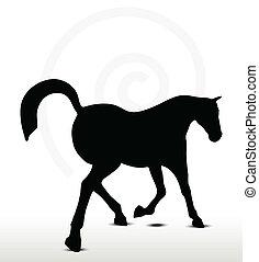 árnykép, ló, táncolás, helyzet